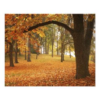 USA, Washington, Spokane, Manito Park, Autumn 2 Art Photo