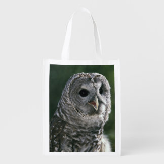 USA, Washington State. Barred Owl (Strix varia)