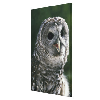 USA, Washington State. Barred Owl (Strix varia) Canvas Print