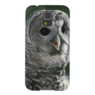 USA, Washington State. Barred Owl (Strix varia) Galaxy S5 Covers