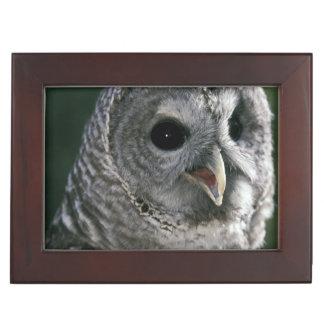 USA, Washington State. Barred Owl (Strix varia) Keepsake Box