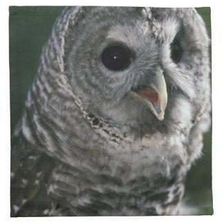 USA, Washington State. Barred Owl (Strix varia) Napkin