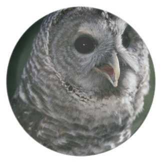 USA, Washington State. Barred Owl (Strix varia) Plate