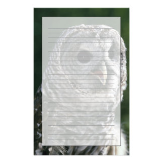 USA, Washington State. Barred Owl (Strix varia) Stationery Design