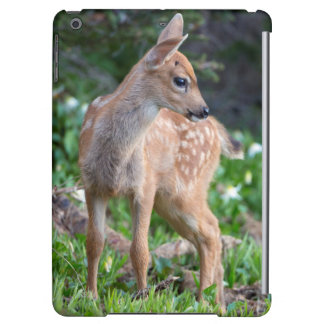 USA, Washington State. Blacktail Deer Fawn
