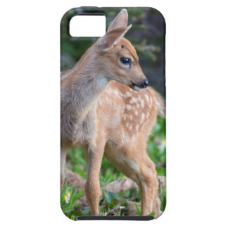 USA, Washington State. Blacktail Deer Fawn iPhone 5 Cover