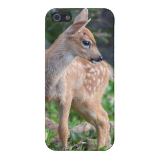 USA, Washington State. Blacktail Deer Fawn Case For iPhone 5/5S