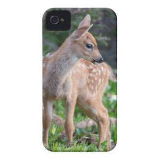 USA, Washington State. Blacktail Deer Fawn iPhone 4 Covers