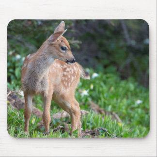 USA, Washington State. Blacktail Deer Fawn Mouse Mat