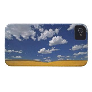 USA, Washington State, Colfax. Ripe barley meets iPhone 4 Cases