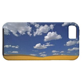 USA, Washington State, Colfax. Ripe barley meets iPhone 5 Case