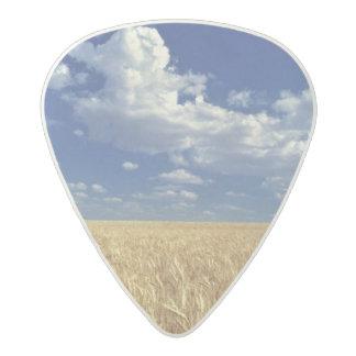 USA, Washington State, Colfax. Ripe wheat Acetal Guitar Pick