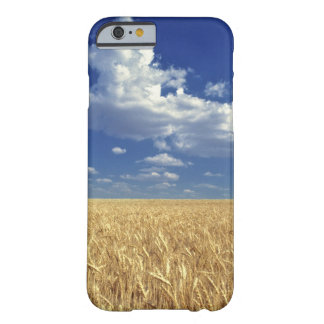 USA, Washington State, Colfax. Ripe wheat Barely There iPhone 6 Case