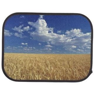 USA, Washington State, Colfax. Ripe wheat Car Mat