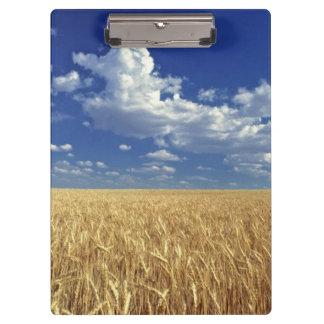 USA, Washington State, Colfax. Ripe wheat Clipboard
