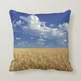 USA, Washington State, Colfax. Ripe wheat Cushion