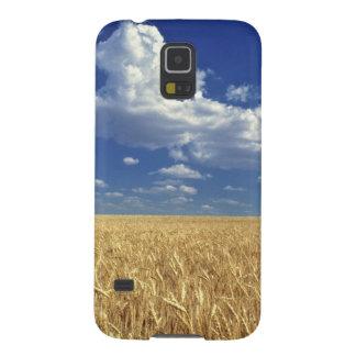 USA, Washington State, Colfax. Ripe wheat Galaxy S5 Cases