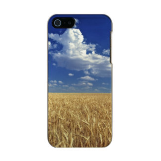 USA, Washington State, Colfax. Ripe wheat Incipio Feather® Shine iPhone 5 Case