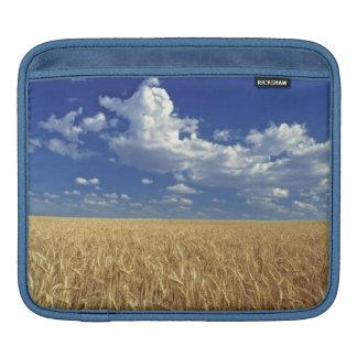 USA, Washington State, Colfax. Ripe wheat iPad Sleeve