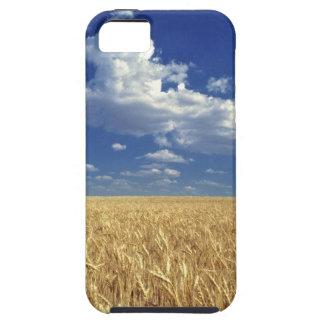 USA, Washington State, Colfax. Ripe wheat iPhone 5 Case