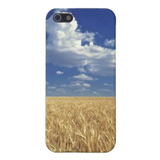 USA, Washington State, Colfax. Ripe wheat iPhone 5 Cover