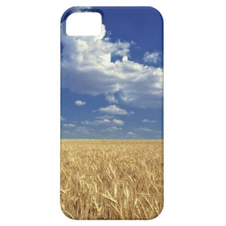USA, Washington State, Colfax. Ripe wheat iPhone 5 Covers