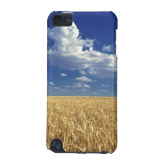 USA, Washington State, Colfax. Ripe wheat iPod Touch 5G Case