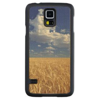 USA, Washington State, Colfax. Ripe wheat Maple Galaxy S5 Case