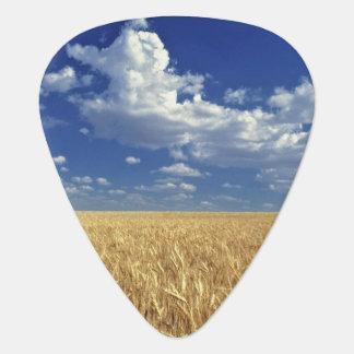 USA, Washington State, Colfax. Ripe wheat Plectrum
