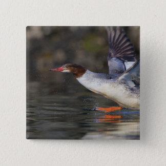 USA, Washington State,Common 15 Cm Square Badge