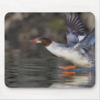 USA, Washington State,Common Mouse Pad