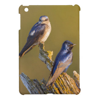 USA, Washington State. Female And Male Purple Case For The iPad Mini