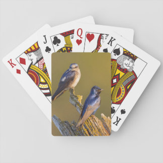USA, Washington State. Female And Male Purple Playing Cards