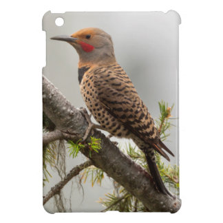 USA, Washington State. Male Northern Flicker 2 Cover For The iPad Mini