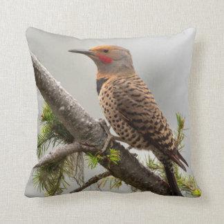 USA, Washington State. Male Northern Flicker 2 Cushion