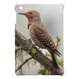 USA, Washington State. Male Northern Flicker 2 iPad Mini Cover