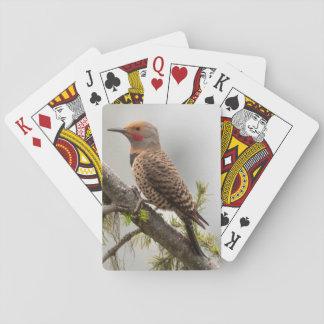 USA, Washington State. Male Northern Flicker 2 Poker Deck