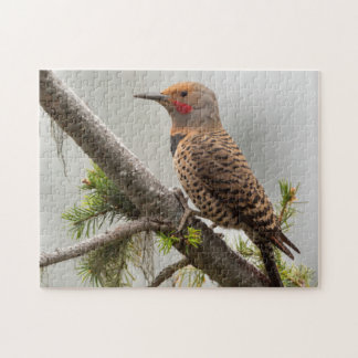 USA, Washington State. Male Northern Flicker 2 Puzzle