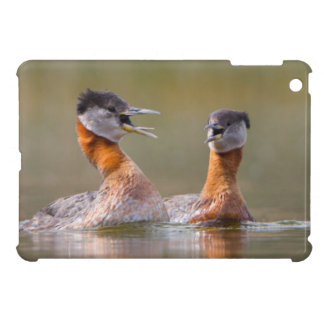 USA, Washington State. Mated Red-Necked Grebes Case For The iPad Mini