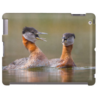 USA, Washington State. Mated Red-Necked Grebes iPad Case