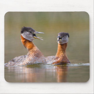 USA, Washington State. Mated Red-Necked Grebes Mouse Pad