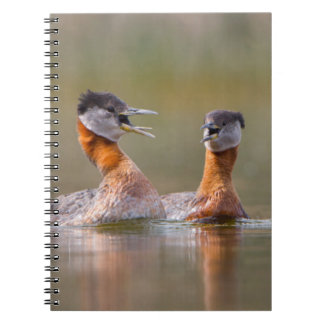 USA, Washington State. Mated Red-Necked Grebes Notebook