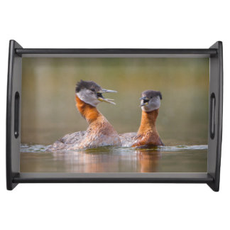USA, Washington State. Mated Red-Necked Grebes Serving Tray