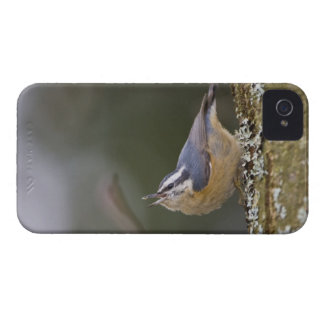 USA, Washington State, Red-brested Nuthatch, iPhone 4 Case-Mate Case