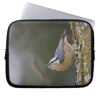 USA, Washington State, Red-brested Nuthatch, Laptop Sleeve