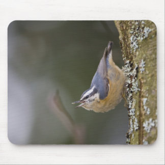 USA, Washington State, Red-brested Nuthatch, Mouse Pad