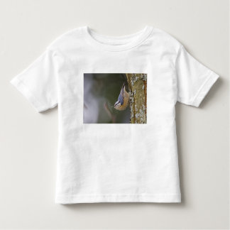 USA, Washington State, Red-brested Nuthatch, Toddler T-Shirt