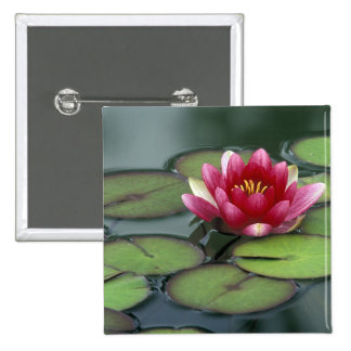USA, Washington State, Seattle. Water lily and 15 Cm Square Badge