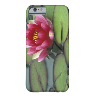 USA, Washington State, Seattle. Water lily and Barely There iPhone 6 Case
