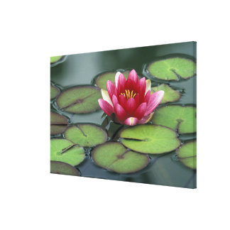 USA, Washington State, Seattle. Water lily and Canvas Print